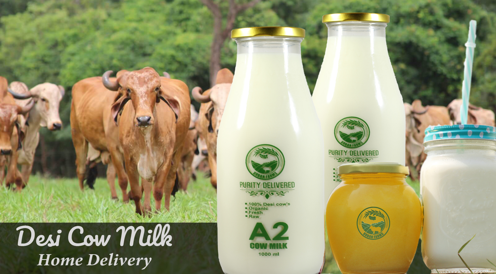Fresh Desi Cow Milk Home Delivery